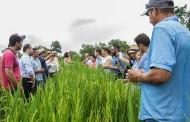 Pequenos produtores investem no cultivo de arroz com incentivo do governo