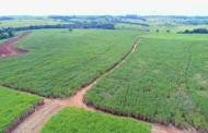Brasil deve produzir menor volume de açúcar desde 2015/16, diz Conab