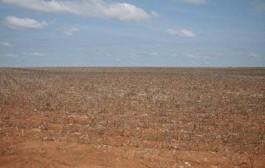 Vazio sanitário para a cultura do algodoeiro começa para a Região II