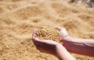 alor da produção agropecuária do país deve somar R$ 565,6 bi em 2018