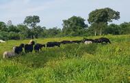 Pesquisadores da Empaer visitam o assentamento Agroana Girau na comunidade São João