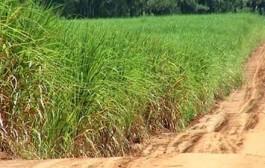 Maior produtor global de cana, Brasil vê outra safra afetada por seca