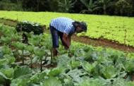 Seaf divulga cotação de preços da agricultura familiar