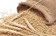 Estudo revela quanto os produtores de trigo gastaram com insumos nos últimos anos