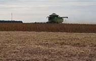 MT deve produzir 31 milhões de toneladas de soja na safra 2017/2018, aponta levantamento