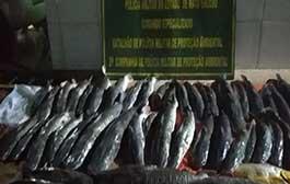 Mais de 630 kg de pescado são apreendidos pelo Comando Especializado e Sema