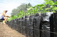 Estado compra mais de R$ 4 milhões em produtos da agricultura familiar