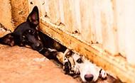 Projeto de lei amplia direitos dos animais em Mato Grosso