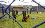 Mato Grosso regulamenta uso de cães como reforço na segurança penitenciária