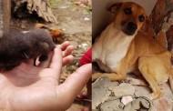 Cães e gatos resgatados de escombros de casa demolida com animais dentro estão internados e precisam de lar em Cuiabá