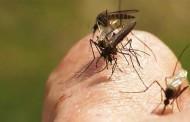 MT é o estado do país com mais casos de chikungunya, diz Ministério da Saúde
