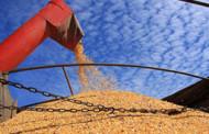 Região Médio Norte registrada 2ª maior produtividade de milho em Mato Grosso