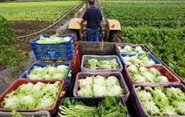 Chamada Pública para aquisição de gêneros alimentícios da Agricultura Familiar e empreendedor familiar rural