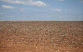 Vazio sanitário do algodão termina nesta sexta (30) para municípios da Região I