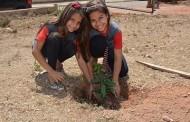 Espécies do cerrado e árvores frutífera são plantadas em escola municipal