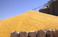 Oferta de milho em Mato Grosso continua sendo menor