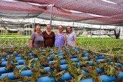 Irmãs investem no cultivo hidropônico e garantem produtividade o ano todo