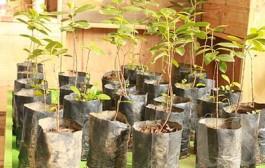 No dia do Meio Ambiente Semmea distribui 500 mudas de árvores