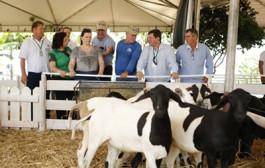Agricultura Familiar realiza negociações de ovinos no Show Safra